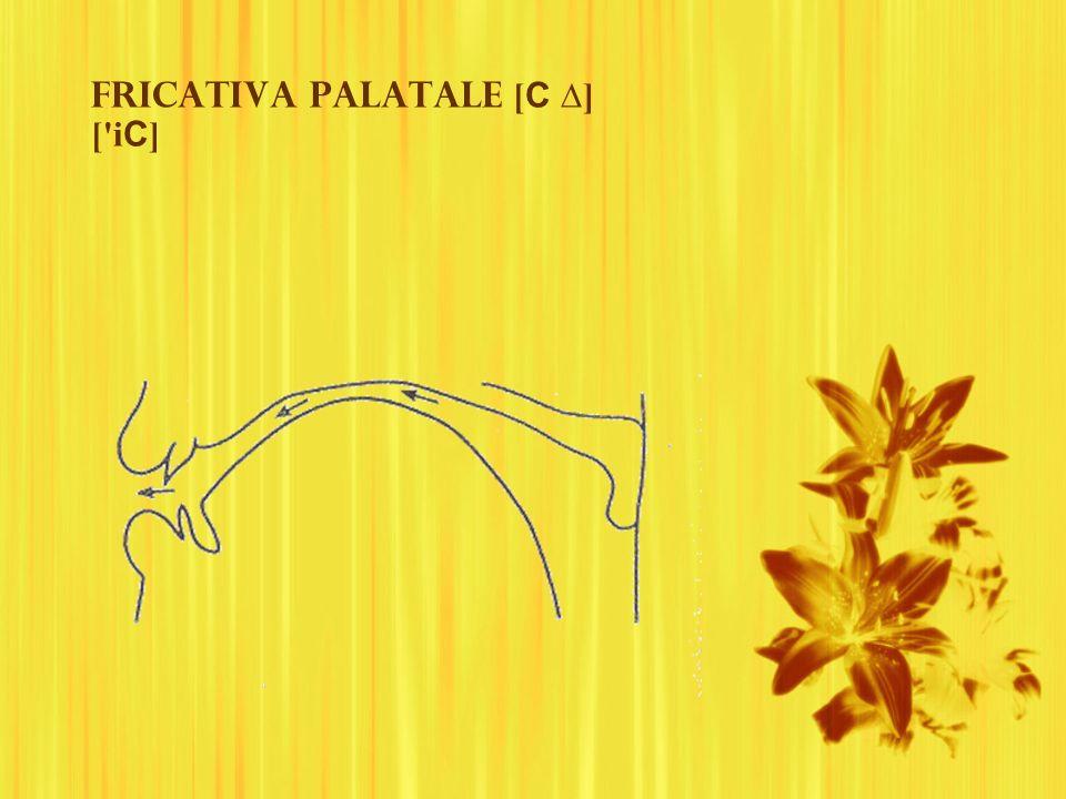 Fricativa palatale [C ∆] [ iC]